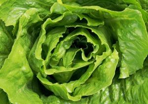 lettuce-1517239_1280